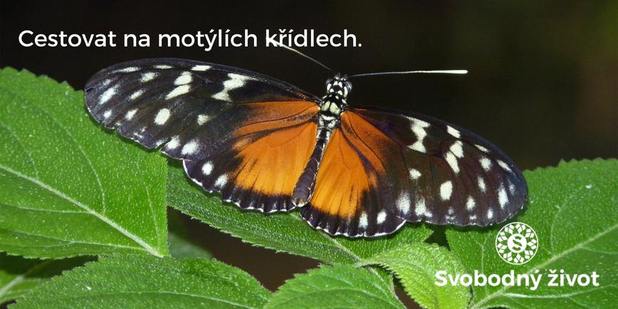 Cestovat na motýlích křídlech.